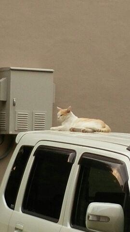 白猫くん20150814.jpg